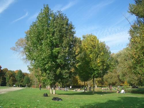Moderne Gartengestaltung von heute: Tipps und Ideen