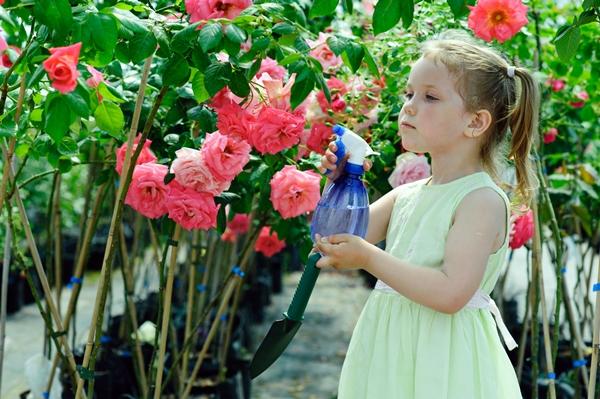 Rosen züchten: Adenauer, Aphrodite und die ADR-Rose