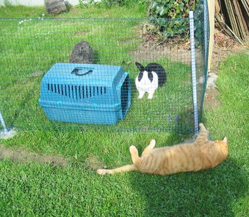 Einfaches Freigehege für Kaninchen selber bauen