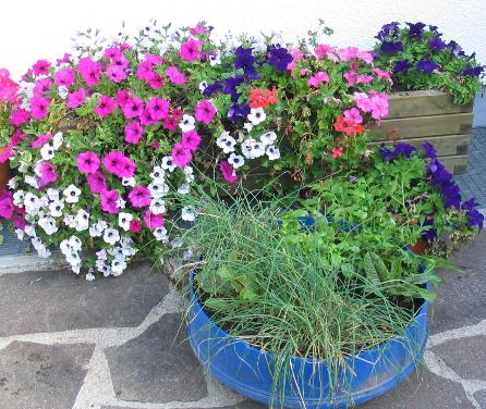 Zierpflanzen und Kräuter - die optische Bereicherung für jede Terrasse