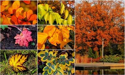 Bunte Herbstbilder Foto: © Rolf Handke  / pixelio.de