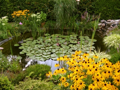 """""""Der ideale Ort für Seerosen, Sommerblumen und Insekten"""" © Bild: Karl-Heinz Liebisch  / pixelio.de"""