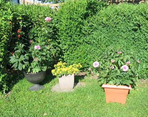 Kübelpflanzen zur natürlichen Gestaltung von Garten und Terrasse