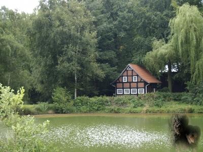 Bild 1: Romantische Teichanlage - nützlich für Mensch und Natur
