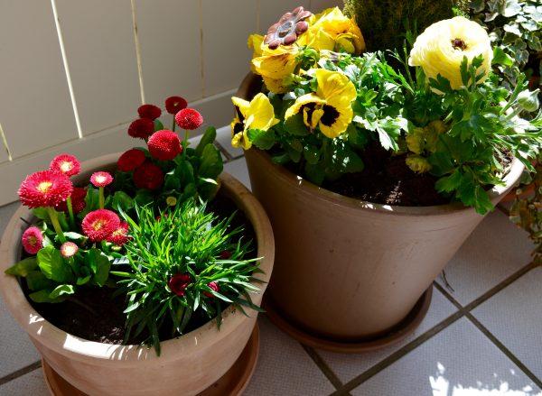 Terrassengestaltung mit Kübelpflanzen