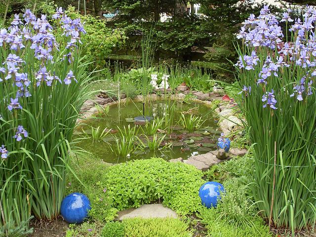 Gartenteichpflege: Die richtige Pflege des Gartenteichs