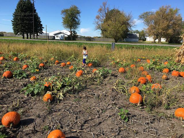 Gartenarbeit im Herbst: Den Garten winterfest machen